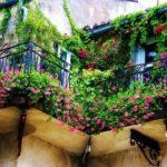 Balcone in inverno: quali piante scegliere per decorarlo