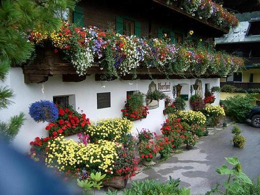 Balcone in inverno quali piante scegliere per decorarlo for Terrazzi fioriti